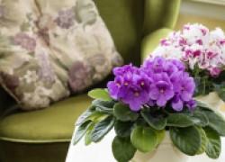 Зеленые экстрасенсы в вашем доме