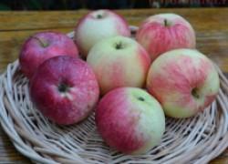 Самые витаминные сорта яблок