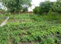 Помощь огороду в жару