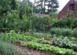 Микробный спецназ на огороде