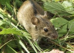 Мыши готовы к переезду... в ваш дом