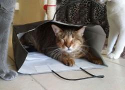 Как содержать слепую кошку