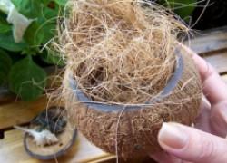 Кокосовое волокно и для рассады, и для разрыхления, и для орхидей