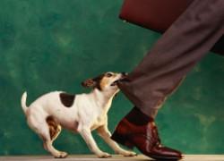 Как наказать хозяина агрессивной собаки