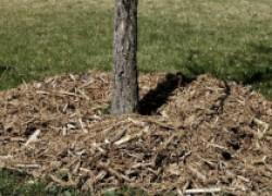 Шуба для корней