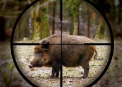 Первая охота на кабана, или Как пятачок нас обманул