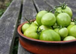Почему помидоры остались зелеными