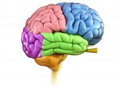Не пропусти! Симптомы рака головного мозга