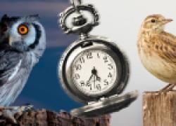 Биоритмы птиц