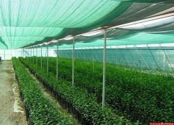 Огород под сеткой