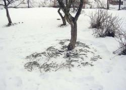 Каждому дереву по юбочке