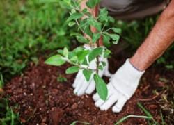 Не успели посадить – прячьте до весны