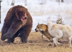Как лайки медведю заснуть не дали