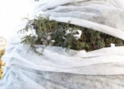 Белое золото – одеяло для корней