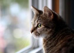 Почему кошка смотрит в пустоту