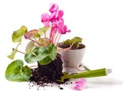 Открываем сезон цветочных посадок