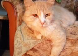 Как в облезлом коте Маргарита красавца увидела