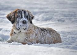Как понять, что собака замерзла