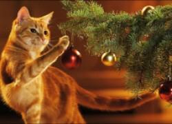 Как уберечь новогоднюю елку от кошки