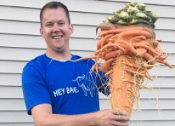 Морковь − рекордсменка