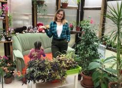 Ипомея-батат – новый писк в ландшафтном озеленении