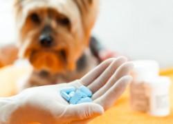 Топ-5 опасных препаратов для животных