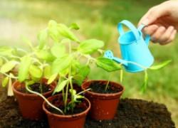 10 ошибок, которые мы допускаем при выращивании рассады
