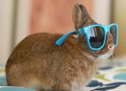 Каким видят мир кролики