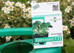 Трихоцин – замена Триходермина