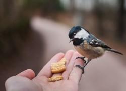 Почему нельзя кормить птиц хлебом