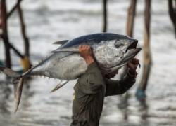 Закон о рыбалке − 2020