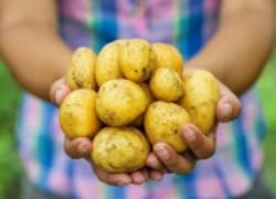 У картофеля внутри круги
