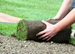 Что такое рулонные газоны?