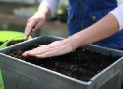 Чистим почву для рассады