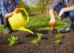 Кому легче: садоводу или огороднику