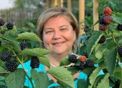 Особенности плодоношения и выращивания садовой ежевики