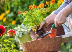 Как превратить садовое хобби в доход для семьи