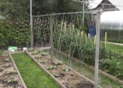 Делаем урожай из воздуха