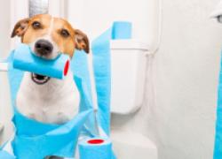 У собаки диарея: в чем причина и что делать