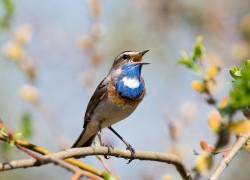 Орнитотерапия – лечебное пение птиц