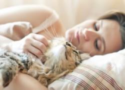 Что делать, если кошка будит слишком рано?