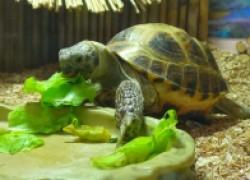 Кормление пресноводных черепах
