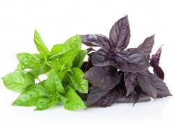 Зелень в салаты добавляй и о болезнях не вспоминай