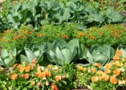 Цветы с подселением: и съесть, и полюбоваться