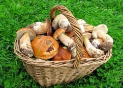 Грибная дача, или Как заработать на грибах