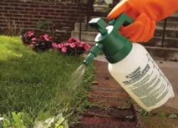 Можно ли применять гербициды в саду, где деревья уже с плодами?