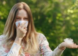 Тополиный пух не виноват в аллергии