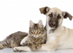 Мифы о кошках и собаках