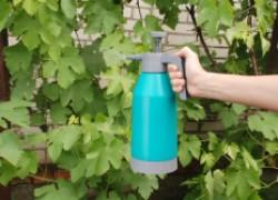 Подготовка черенков для посадки в школку
