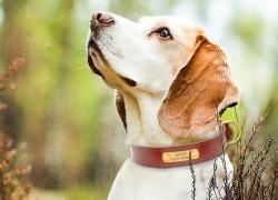 Адресник для собаки и его необходимость